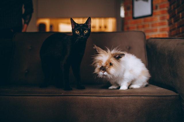 animal-cats-cute